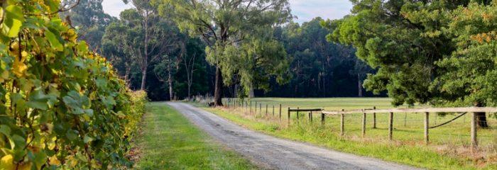 Vines, vineyard, wine, winery, view, pretty, trees, Melbourne fringe