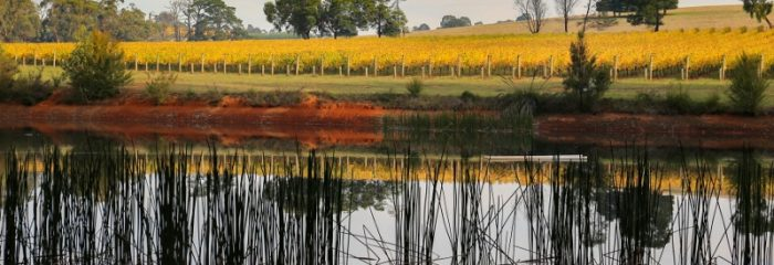Vines, vineyard, wine, winery, view, dam, pretty, Yarra Valley, Woori Yallock