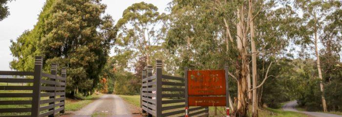 Lone Star Creek Vineyard, entrance, trees