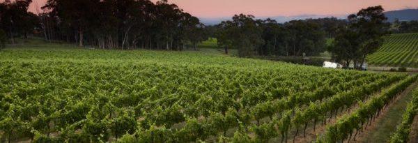 Vines, vineyard, wine, winery, view, dam, pretty, trees,