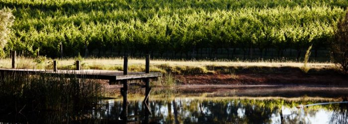 Dam, vineyard, vines, reflection