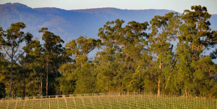 Lone Star creek vineyards, trees, mountains